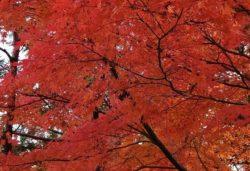秋の明治村
