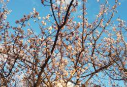 春が近づいています